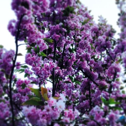 Mons Krasivo весна у нас розовая