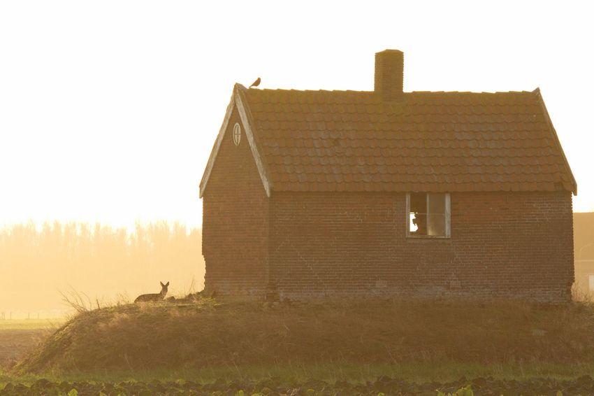 Ree Terp Biesbosch Reegeit Roe Deer Capreolus
