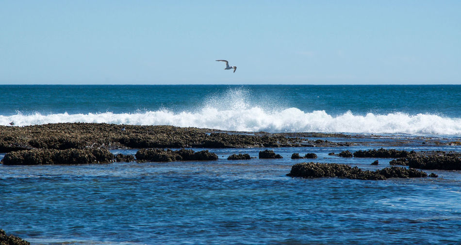 Sea gull in flight over the Indian Ocean waves crashing into the rock pools at Blue Holes Beach in Western Australia. Beach Beauty In Nature Bird Blue Blue Holes Coral Coast Day Flying Horizon Over Water Indian Ocean Kalbarri Motion Nature Outdoors Rock Pools Scenics Sea Sea Gull Sky Tide Pools Tranquil Scene Travel Destinations Water Wave Western Australia