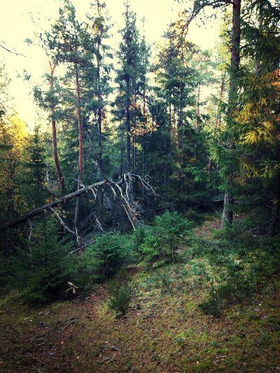 Walking Around Forest Autumn