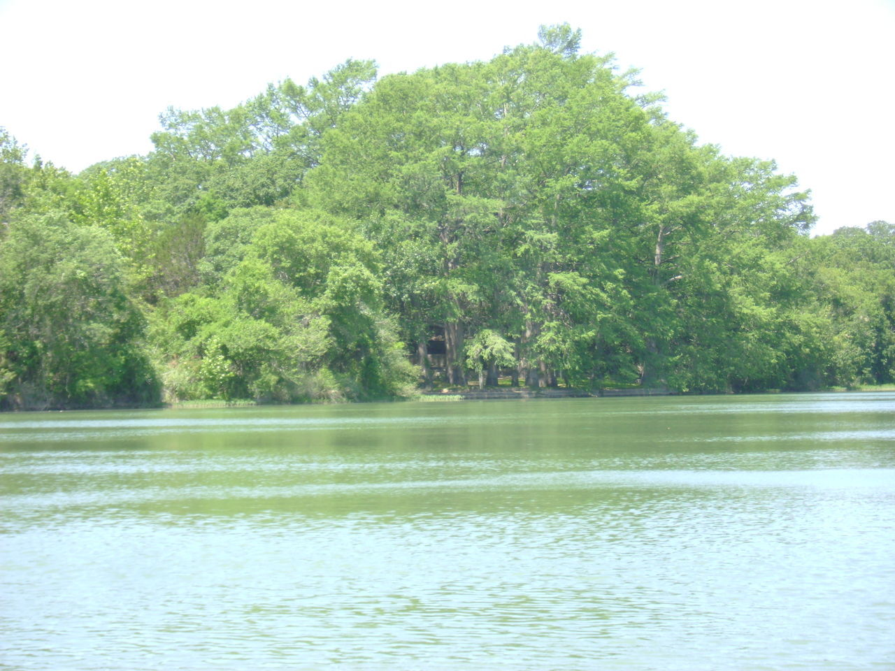 tree, water, nature, beauty in nature, lake, tranquil scene, reflection, growth, no people, outdoors, tranquility, day, scenics, forest, sky