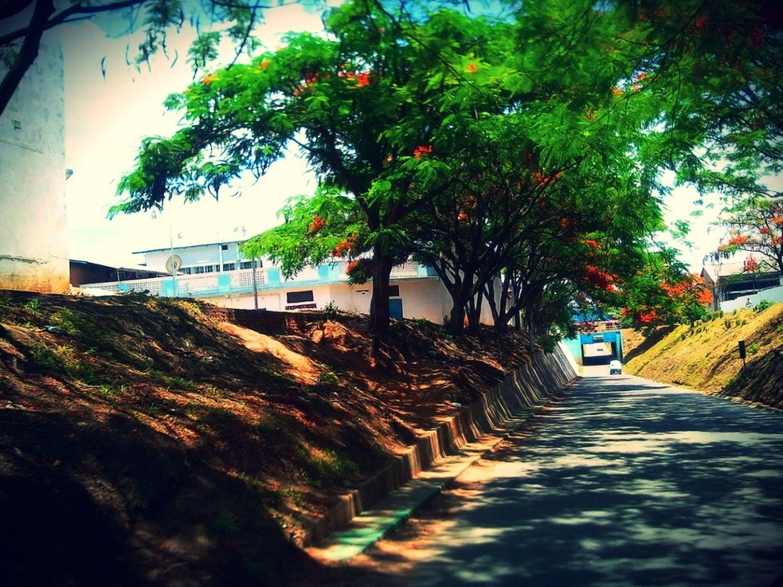 the way forward, building exterior, built structure, architecture, tree, street, diminishing perspective, narrow, walkway, road, long, footpath, empty, house, vanishing point, pathway, alley, day, transportation, outdoors