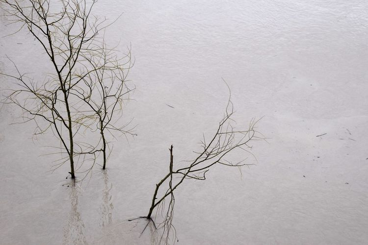 High angle view of bare tree by lake during winter