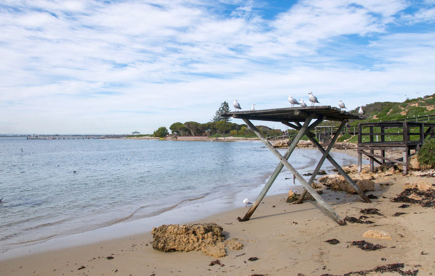 Bay at Penguin Island with wooden shelter, sea gulls and limestone rock in Western Australia. Bay Beach Bird Boardwalk Coastal Dunes Group Gull Indian Ocean Limestone Lookout Nature Ocean Peaceful Penguin Island Remote Sand Sea Sea Gull Shelter Sky Water Western Australia Wildlife Wooden