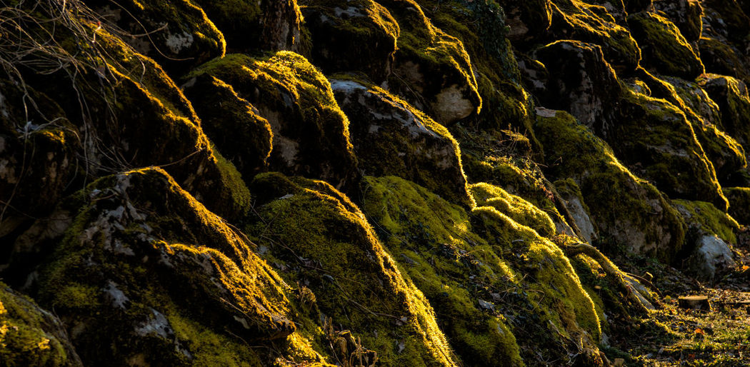 mossy stones in the sunset Grass Moss Mossy Mossy Rock Mossy Stones North Side Stones Sunset