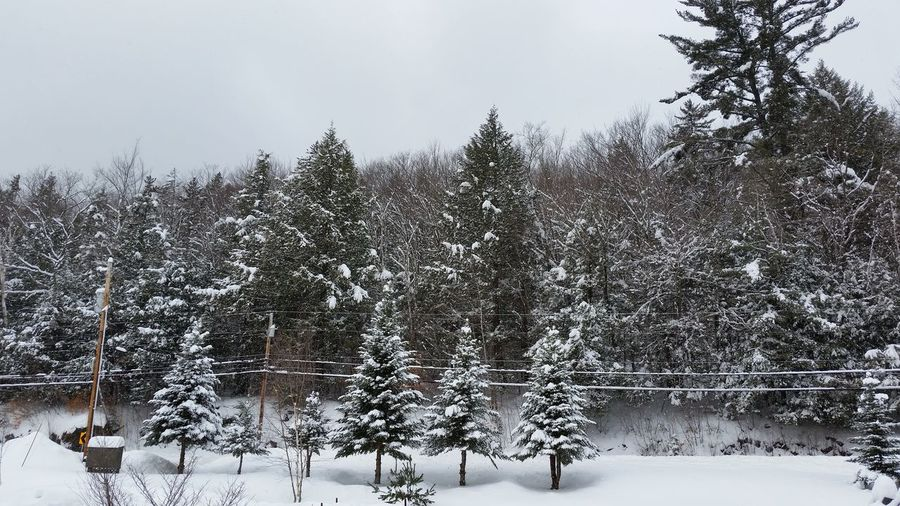 February Snow NH Day Snowstorm2017 Landscape_Collection Landscape Trees Snow Seasons Colletion North Woodstock, Nh White Mountain National Forest New Hampshire, USA New England  Winter Beauty In Nature Woodstock, NH New Hampshire Nature No People Tranquility