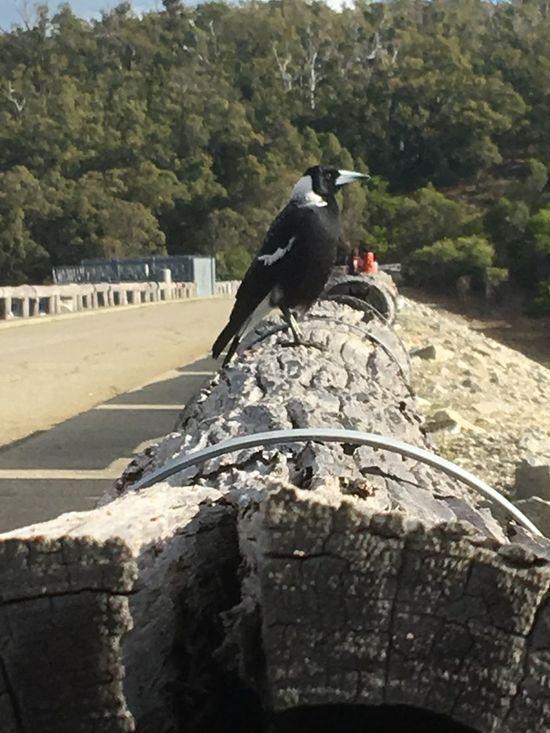 Always waiting Bird Animal Themes Vertebrate Animal Animal Wildlife Animals In The Wild Perching One Animal Day