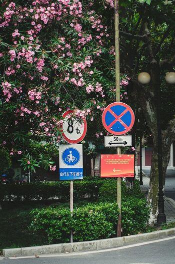 是的,终于有一张竖构图的 东华大学 Dhu 前年会学校时拍的 拖着一直没修 Nikon D300 Sigma S35 35mm Taking Photos Shanghai China 颜色太艳了 凑合看吧