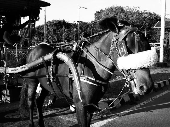 Encumbered. Eyeem Philippines EyeEm Philippines Manila Meetup EyeEm Manila Sunday In Manila Everyday Philippines Bw_collection Streetphoto_bw Street Photography Blackandwhite Streetphotography Mobilephotography Photowalking Manila Mobilephotographyphilippines Mobilephotographyph Showcase March My Country In A Photo This Is Philippines Making A Living Monochrome Photography