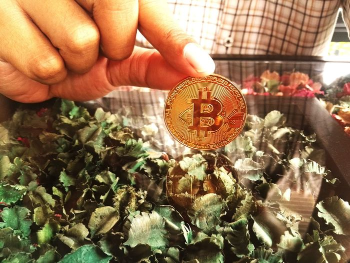 Business man with Bitcoin using for business in flower shop. electronic curreny digital business technology concept Currency Economics Bitcoin Digital Currency Human Hand Men Holding Close-up Blooming Stall Petal Market Stall Stamen Hibiscus For Sale Market Display Cosmos Flower
