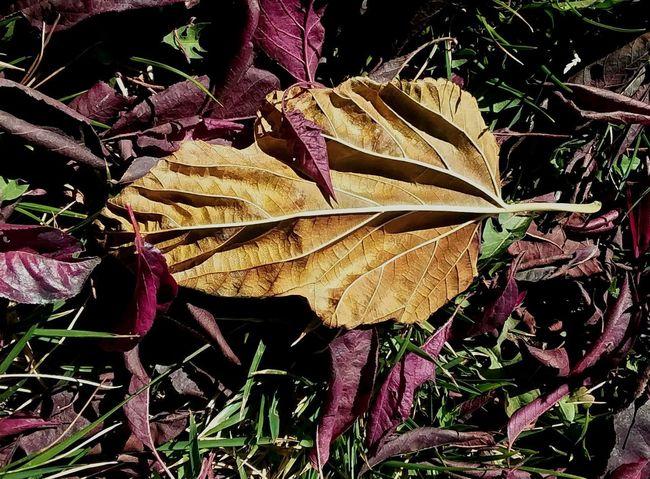 Leaf Autumn Close-up Plant Autumn Mood