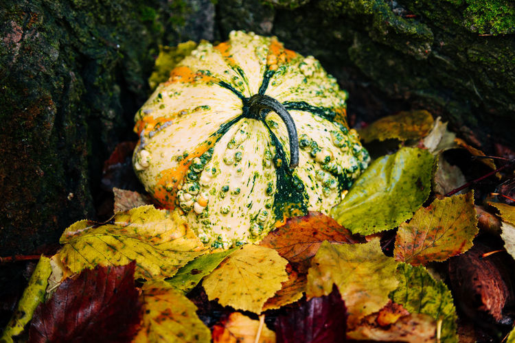 Autumn Beauty In Nature Close-up Day Food Food And Drink Freshness Green Color Growth Healthy Eating Leaf Nature No People Outdoors Plant Plant Part Pumpkin Selective Focus Vegetable Wellbeing