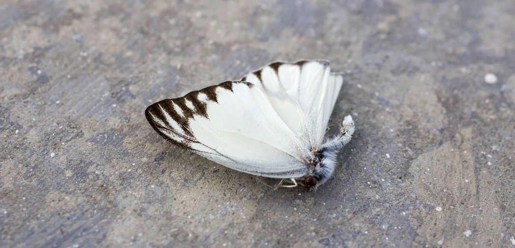 Animal Themes Beauty In Nature Butterfly - Insect Close-up Fragility Insect Nature No People
