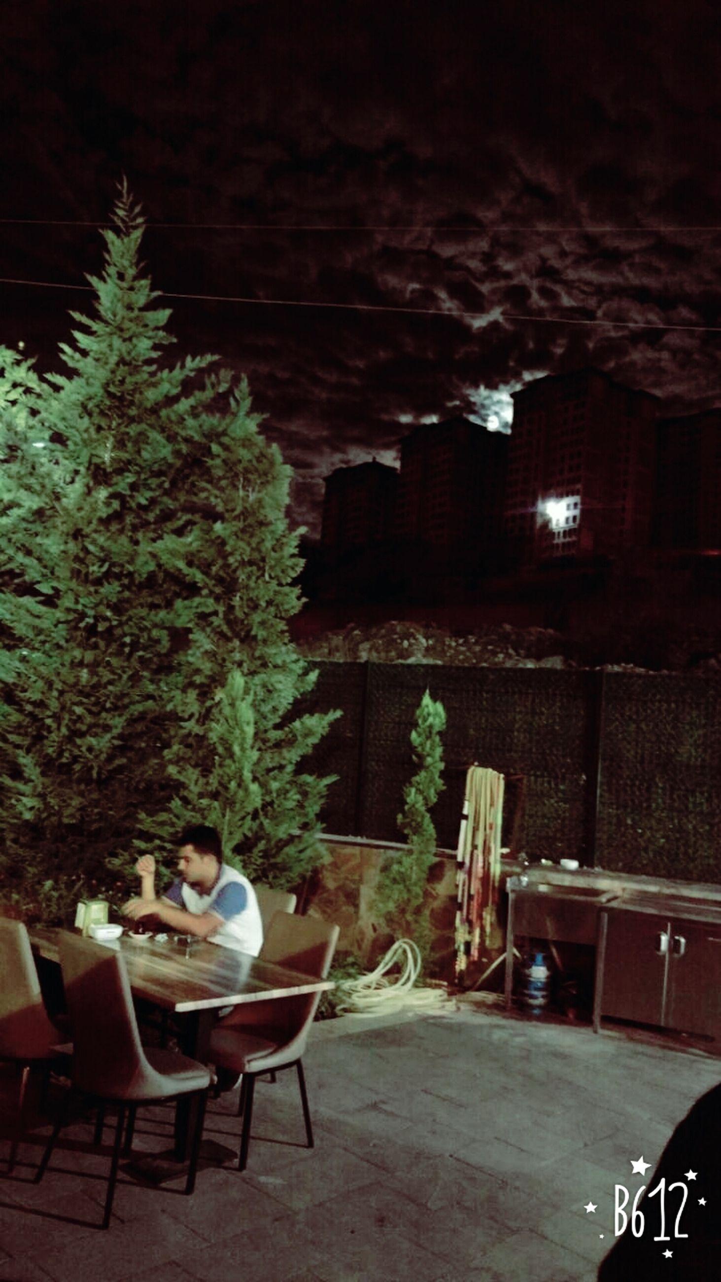 tree, table, night, dining table, chair, celebration, indoors, illuminated, christmas tree, no people, nature