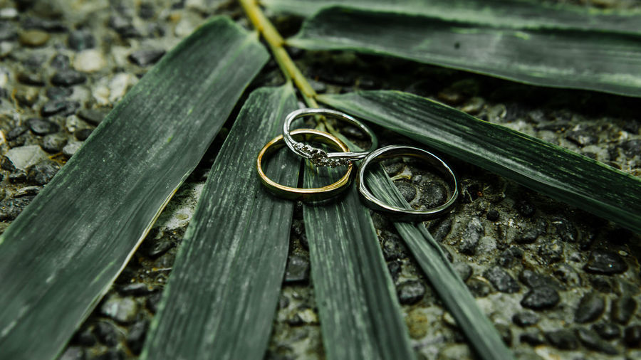 The Rings Wedding Photography Wedding Day Wedding Dress Wedding Ring Photography Wedding Rings Wedding