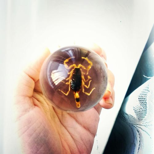 скорпион биология шарик