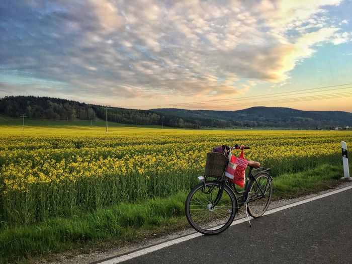 View of a rapeseed field and a bike Sky Scenics Landscape Nature Bicycle Tranquil Scene Field Tranquility Beauty In Nature Mountain Agriculture Transportation Cloud - Sky Outdoors Real People Road Rural Scene Growth Sunset Day The Great Outdoors - 2017 EyeEm Awards