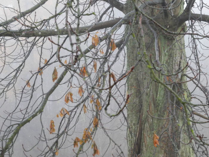 Nature Branch Growth Tree No People Beauty In Nature Plant Tranquility Bare Tree Day Close-up Outdoors Mist Leaf Leaves - in Rødovre, Denmark