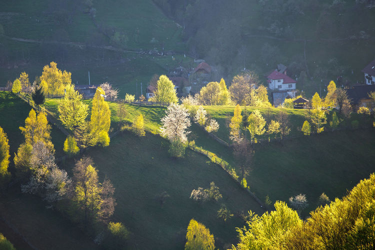 High angle view of yellow flowering plants by trees