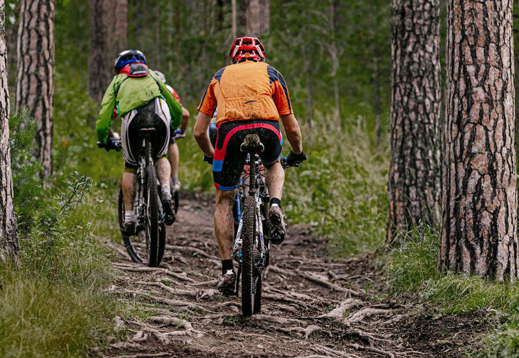 Back group cyclists riding mountain bike. uphill on muddy trail with roots