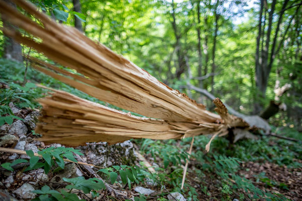 Beauty In Nature Day Focus On Foreground Forest Green Color Growth Land Log Nature No People Outdoors Plant Selective Focus Timber Tranquility Tree Tree Trunk Wood Wood - Material WoodLand