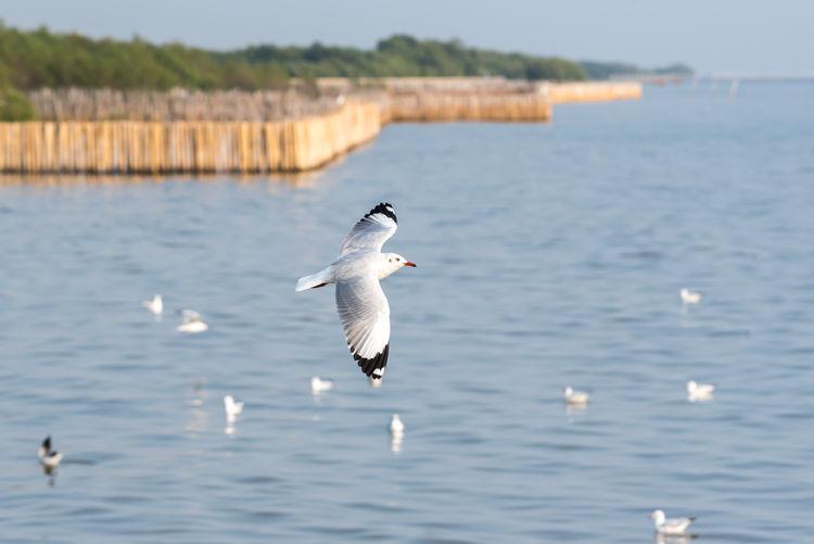 Bird (Seagulls,