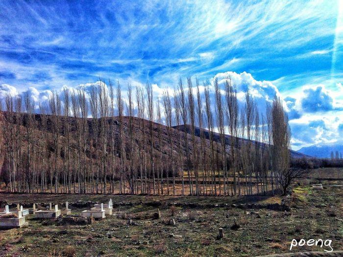 Kavak Trees