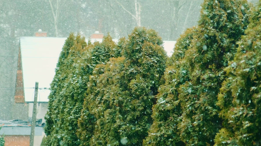 Close-up of plants against building during winter