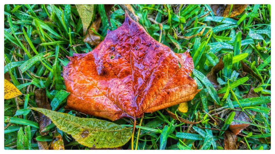Learn & Shoot: Simplicity Nature Autumn Leaves Fall Note 5