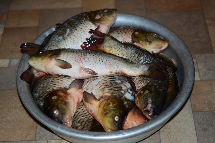 Сазаны и карпы Sazan Karp Kazan Russia Рыбалка таз с рыбой😁 уха будет😄 налетай😀 Fish Food Food And Drink Freshness Healthy Eating Raw Food