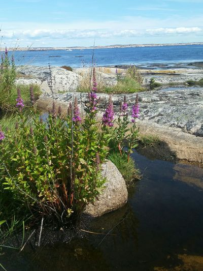 At Hållö Island. Enjoying Life Relaxing Summer Flowers Water Nature Sea And Sky By The Sea Stone FamilyTime
