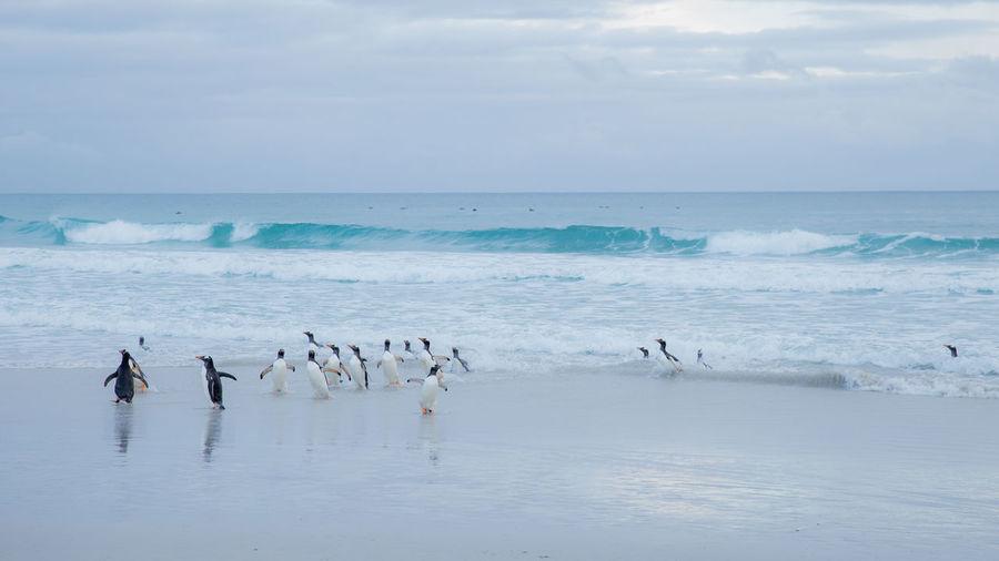 Swans on sea against sky