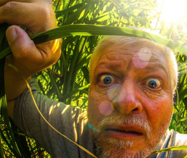 Portrait Of Shocked Man Amidst Grass