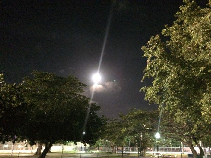 Beautiful Night Full Moon Tree Art Natural