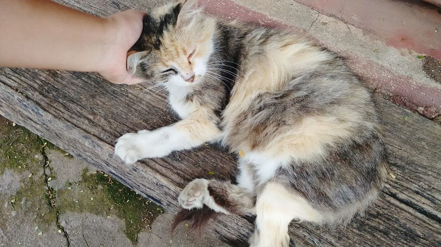 Cropped Hand Petting Cat Sleeping On Bench