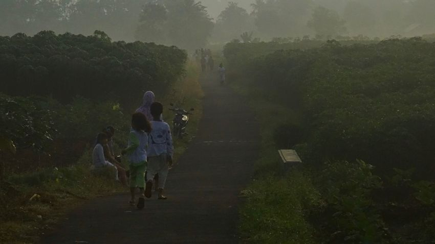 Sunday morning Sunrise Morning Sunday Sunday Morning Sky Landscape Minggu Pagi Panorama Picture Photos Photo Photography Green View Tour Travel Travelling Beautiful Banyumas Purwokerto Jawatengah INDONESIA Green Color Agriculture Farmer Farm Crop  People Rice - Cereal Plant Field Rural Scene Child Nature