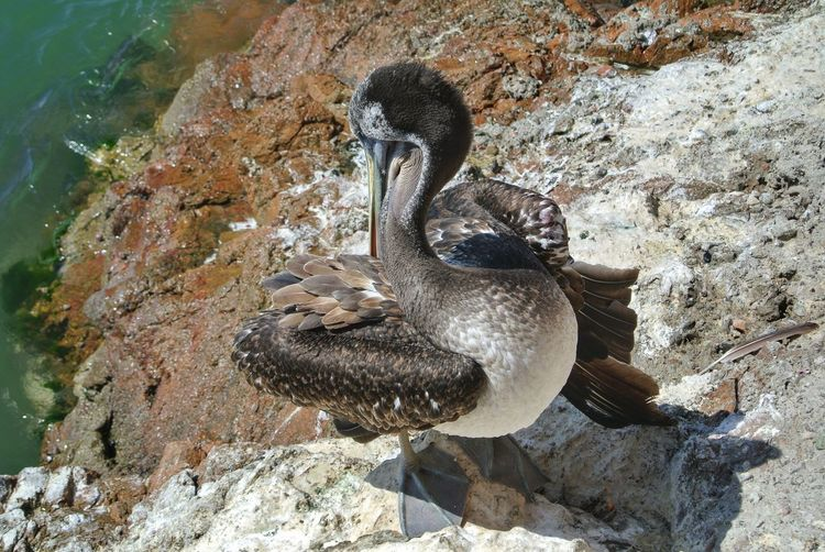 High angle view of duck swimming on rock