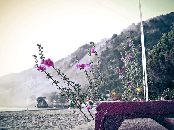 Bartın Bartın Turkey Pink Animal Themes Bartin EyeEmNewHere Beauty In Nature Clear Sky Day Flower Inkum Inkumu Landscape Mammal Mountain Nature No People Outdoors Pink Color Pink Flower Pink Flowers Scenics Tranquility Tree