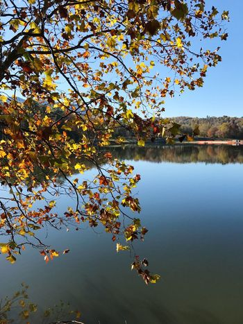 Water Nature Tree Reflection Lake Beauty In Nature Scenics Tranquility Sky Outdoors Growth Autumn No People Tranquil Scene Branch Day Flower Refection Foreground