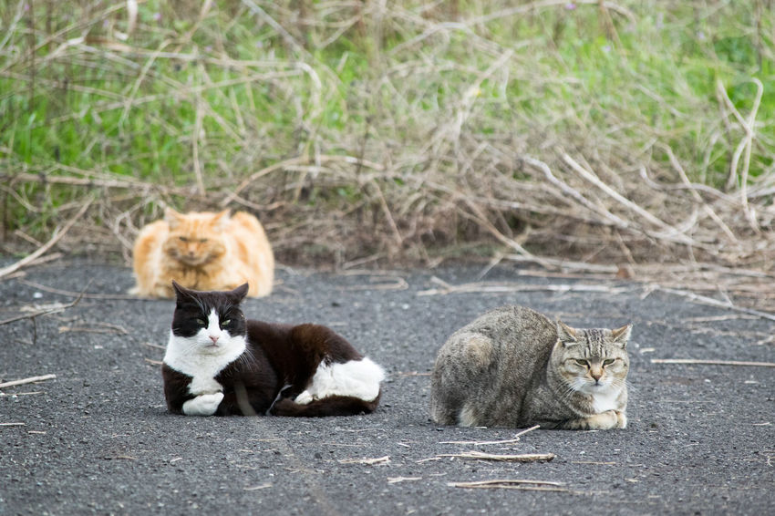 Animal Themes Cat Domestic Animals Domestic Cat Feline Full Length Looking At Camera Lying Down Mammal One Animal Outdoors Pets Portrait Relaxation Relaxing Resting Sitting Stray Animal Two Animals Zoology