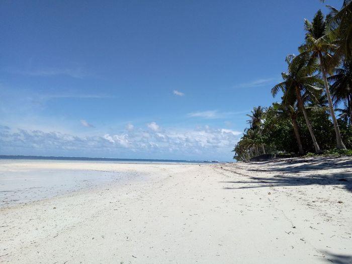 Tacbu, Siargao Island Coconut Trees Siargao Island Tree Water Sea Beach Sand Blue Sky Horizon Over Water Landscape