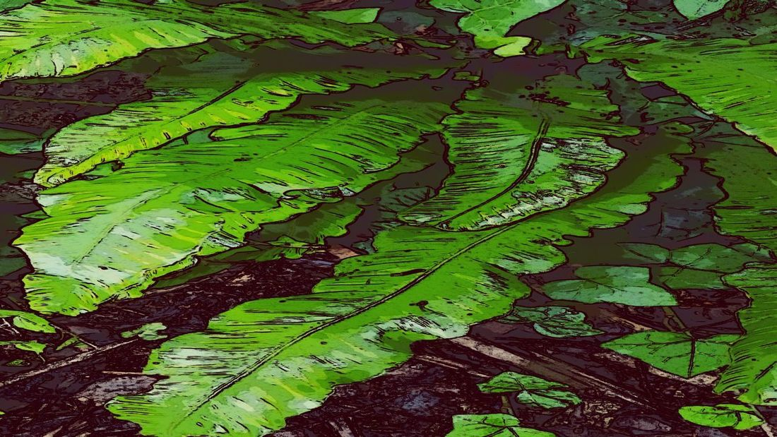 Forest Floor Green Color Leaf Backgrounds Nature Full Frame No People Outdoors Growth Beauty In Nature Close-up Day Fragility Freshness Ink My World 🌍 Bognor Regis BritishSummerTime Felpham Garden Joy Beauty In Nature Tranquility Green