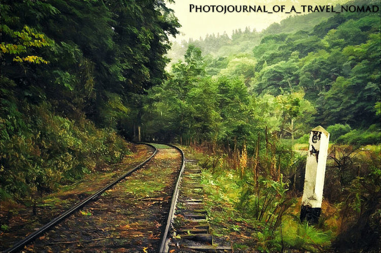 She awaits his presence in her life to lighten and brighten each other's days and nights - those summery greens and the bluish colds, to the lakes and rivers of feelings within them and to the abundance of love they have for each other. Railway Track Himachalpradesh Incredible India Trip_shot Traveller_india Nomadic Life Backpackingescapades Wa_nderlust Lady Loves Travel And Click Outdoor Bella Themountainsarecalling Lovestory No Edit/no Filter Mesmerizing Shot Melancholic Landscapes Imissyou and Iloveyou Pavan_Rathi Natures Beauty Naturescape Green Green Green!  After Rains Monsoon Trip Roadtrip Travel Photography