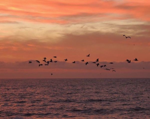 Birds Of EyeEm  Pastel Sky Pastel Clouds Clouds Reflection Pelicans In Flight Pelicans And Sunset Birds Flying Over Sea Group Of Animals Large Group Of Animals Horizon Over Sea Sunset Clouds And Sky Colors
