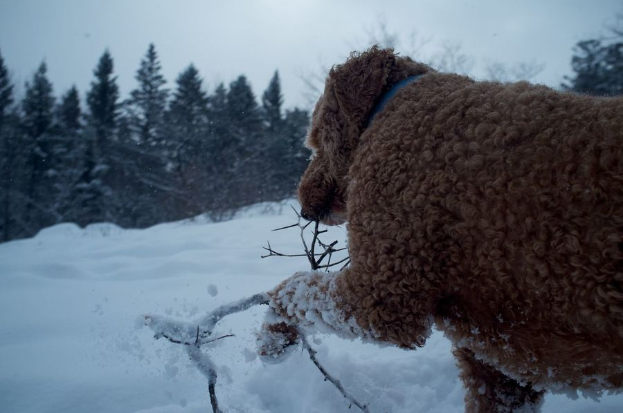 January 26, 2016 Bare Tree Cold Cold Temperature Covered Covering Day Duluth Frozen Goldendoodle Minnesota No People Outdoors Season  Snow Tranquility Weather White White Color Winter The Great Outdoors - 2016 EyeEm Awards