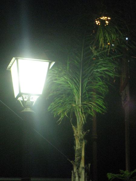 Luce Palma Albero Close-up Growth Illuminated Indoors  Lampione Nature Night No People Notte Plant