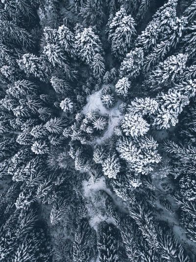 EyeEm Nature Lover Frost Nature Above Aerial Photography Backgrounds Beauty In Nature Close-up Cold Cold Temperature Day Dronephotography Forest Frozen Full Frame Nature Nature_collection No People Outdoors Pine Tree Snow Snow Covered Trees Snowflake White Winter Go Higher The Great Outdoors - 2018 EyeEm Awards