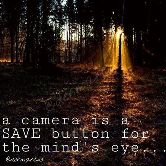 Photography Quote Quotesandsayings Madewithpicsart Forest Sunrays Mystyle Landscape Sunset