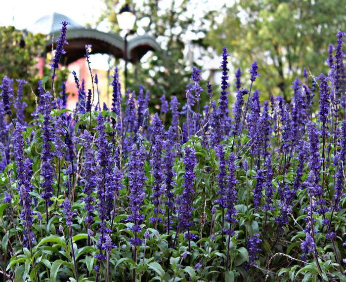 """Spring"" Flower Purple Beauty In Nature Fragility Rural Scene Close-up Santiago De Querétaro"