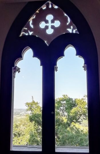 Tree Window Sky